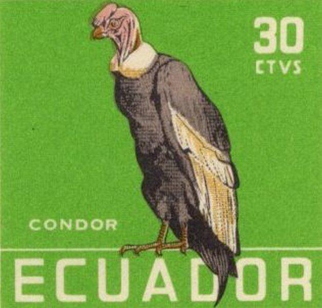 Ecuador 1958 feature image