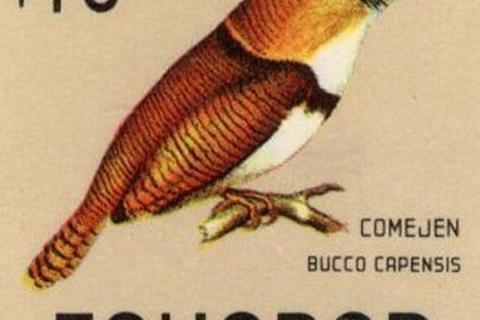 Ecuador 1966 feature image birds