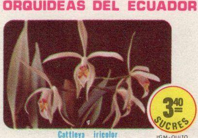 Ecuador 1980 feature image
