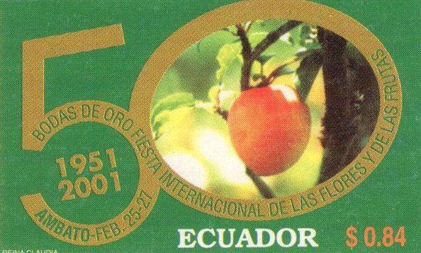 Ecuador 2000 feature image 5